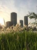 Sonnenuntergangstadtpark Stockfoto