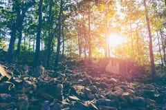 Sonnenuntergangszene im Wald mit Weinleseton Stockfotos