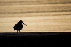Sonnenuntergangvogel Lizenzfreie Stockbilder