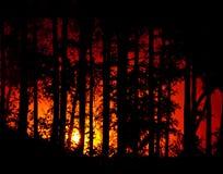 Sonnenuntergangwald Lizenzfreies Stockbild
