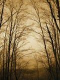 Sonnenuntergangwald Stockfoto