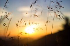 Sonnenuntergangwiese Stockbild
