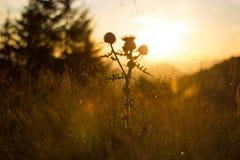 Sonnenuntergangwiese Stockfoto
