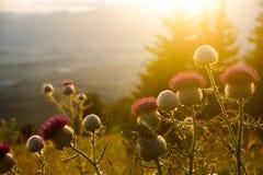Sonnenuntergangwiese Lizenzfreies Stockfoto
