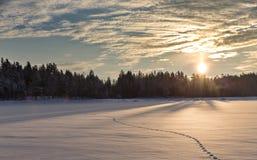 Sonnenuntergangwiese im Winterwaldweißes Seeufer Stockfoto