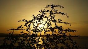 Sonnenuntergangwurf der Baum Stockbilder