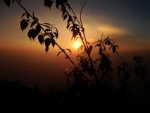 Sonnenuntergangzeitschattenbild-Baumhimmel lizenzfreies stockbild
