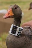 Sonnerie d'oiseau Image stock