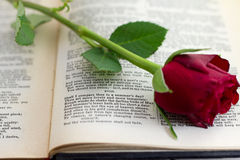 Sonnet 18 with red rose. William Shakespeare's sonnet number 18, Shall I compare thee to a summer's day with a red rose laying across the page stock photos