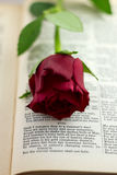 Sonnet 18 red rose vertical Royalty Free Stock Images