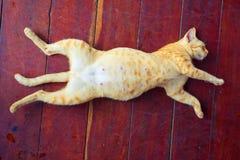 Sonni del gattino Fotografie Stock