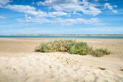 Sonnige Ansicht des lokalen Strandes in Fuseta, Ria Formosa Natural-Park, Portugal Stockbild