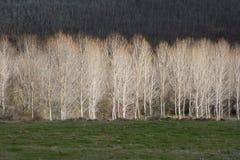 Sonnige Bäume Stockfoto