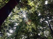 Sonnige Blätter Stockbilder