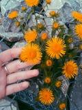 Sonnige Blumen Stockfotos
