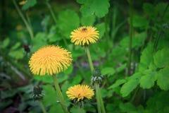 Sonnige Blumen Stockbilder
