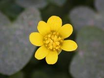 Sonnige gelbe Blume lizenzfreies stockfoto