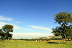 Sonnige Hügel, Wälder und Wiesen Lizenzfreie Stockfotos