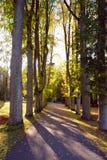 Sonnige Herbstgasse Stockfoto