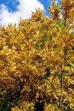 Sonnige Herbstlandschaft mit blauem Himmel Stockfoto