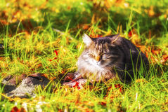 Sonnige Katze, Glück Stockfoto