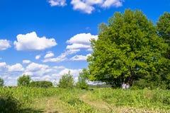 Sonnige Landschaft der Landschaft am Anfang des Sommers Stockfotos