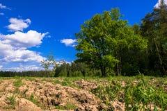 Sonnige Landschaft der Landschaft am Anfang des Sommers Stockfotografie