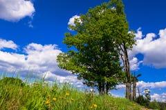 Sonnige Landschaft der Landschaft am Anfang des Sommers Stockfoto