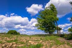 Sonnige Landschaft der Landschaft am Anfang des Sommers Lizenzfreie Stockfotografie