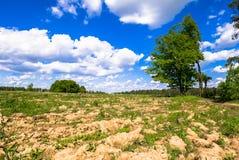 Sonnige Landschaft der Landschaft am Anfang des Sommers Stockbilder