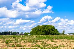 Sonnige Landschaft der Landschaft am Anfang des Sommers Stockbild