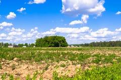 Sonnige Landschaft der Landschaft am Anfang des Sommers Lizenzfreies Stockfoto