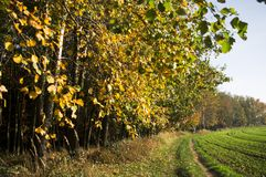 Sonnige Landschaft des Herbstes lizenzfreie stockfotografie