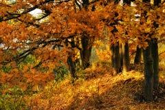 Sonnige Landschaft des Herbstes Stockbild