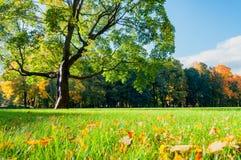 Sonnige Landschaft des Herbstes in den natürlichen Tonherbstbäumen im Stadtpark am sonnigen Herbsttag Stockfotos