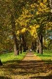 Sonnige Landschaft des Herbstes mit in Pushkin-Garten Stockbilder