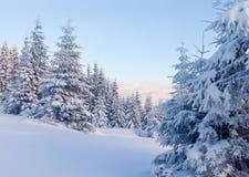 Sonnige Landschaft im Berg lizenzfreie stockbilder