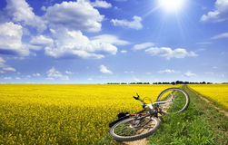 Sonnige Landschaft mit Fahrrad Stockfotos