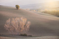 Sonnige Landschaftsfelder und -hügel Lizenzfreies Stockbild