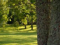 Sonnige Lichtung im Park Lizenzfreie Stockbilder