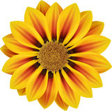 Sonnige orange Blume Stockfoto