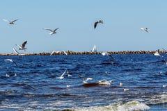 sonnige Sommerszene von Ostsee mit schöner Küste mit wav Stockbild