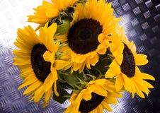 Sonnige Sonnenblumen Lizenzfreie Stockfotos