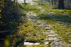Sonnige Straße mit Gras Lizenzfreies Stockfoto