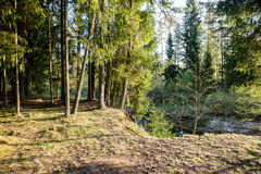 Sonnige touristische Spur im Wald im Herbst Stockfoto