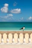 Sonnige tropische Küste mit der Möve, die auf Zaun sitzt lizenzfreie stockfotografie