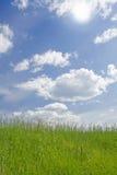 Sonnige Wiese Grünes Gras Lizenzfreie Stockfotos