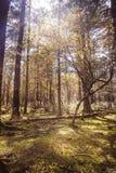 Sonnige Wiese im Wald Stockfotos