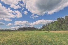 sonnige Wiese mit Blumen und grünem Gras niedriger Standpunkt - v Stockfoto