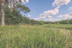 sonnige Wiese mit Blumen und grünem Gras niedriger Standpunkt - v Stockfotos